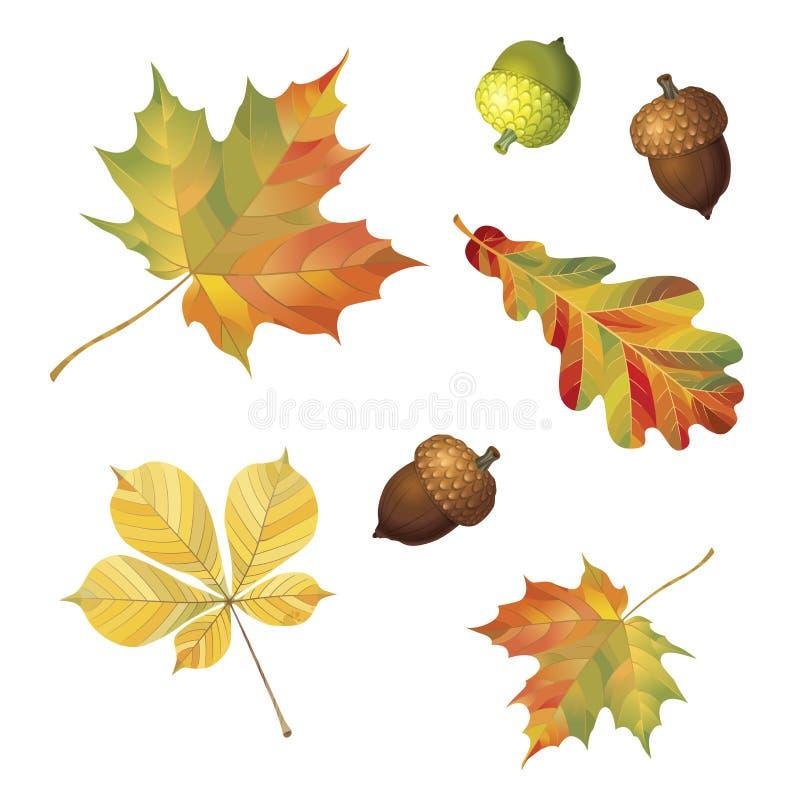 Reeks de herfstvoorwerpen Eikels en bladeren op witte achtergrond worden geïsoleerd die Esdoorn, eik en kastanje Vectorillustrati royalty-vrije illustratie