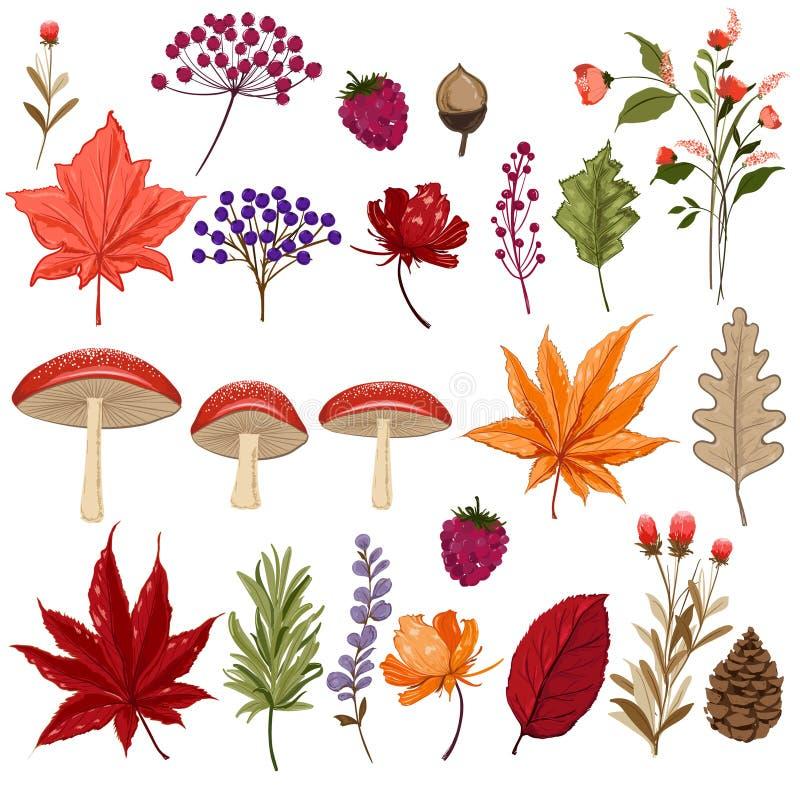 Reeks de kleurrijke paddestoel en bessen van de herfstbladeren geïsoleerde royalty-vrije illustratie