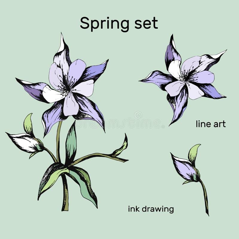 Reeks de lentebloemen van roze en purple op een witte achtergrond Aquilegia Met de hand getrokken de lenteboeket vector illustratie