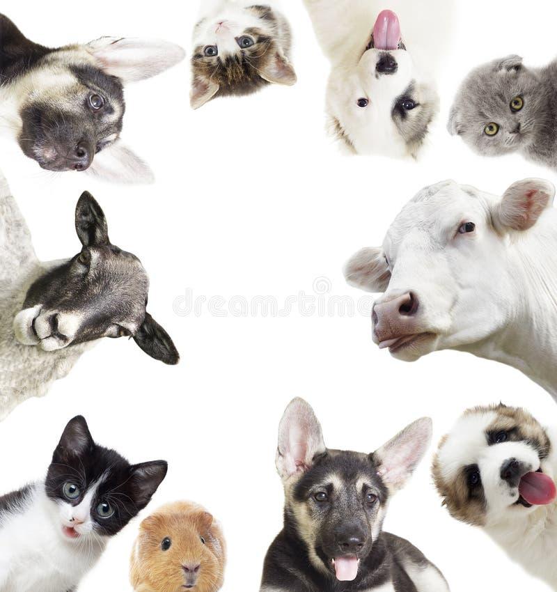 Reeks dieren stock afbeeldingen