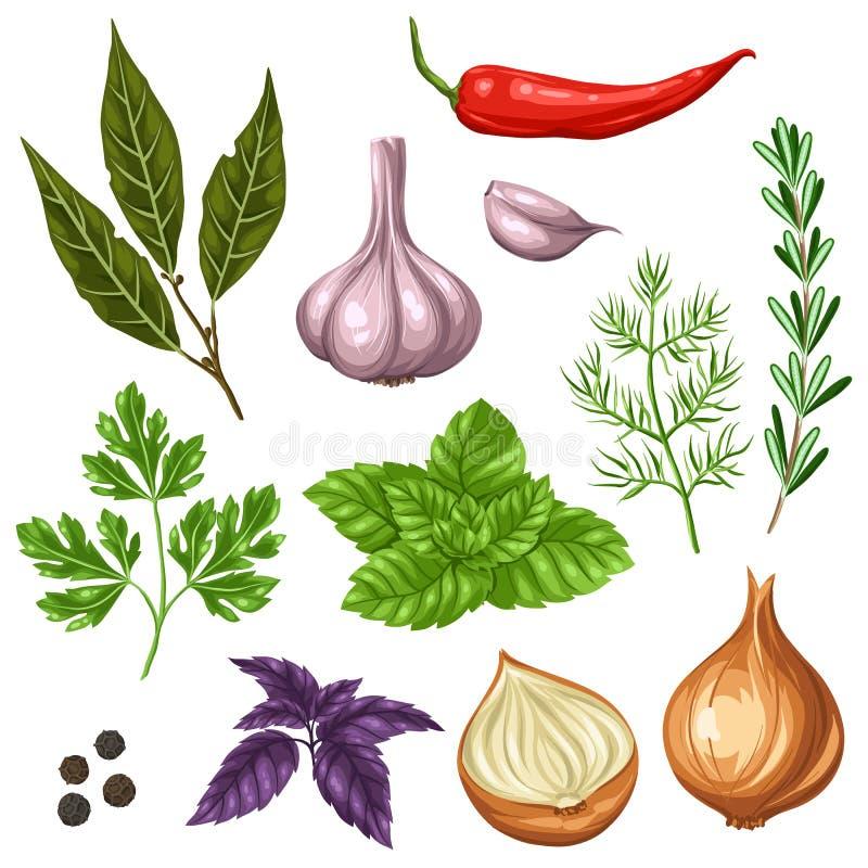 Reeks diverse gestileerde kruiden en kruiden stock illustratie
