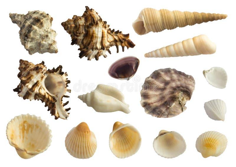 Reeks Diverse Overzeese die Shells op Witte Achtergrond wordt geïsoleerd stock fotografie