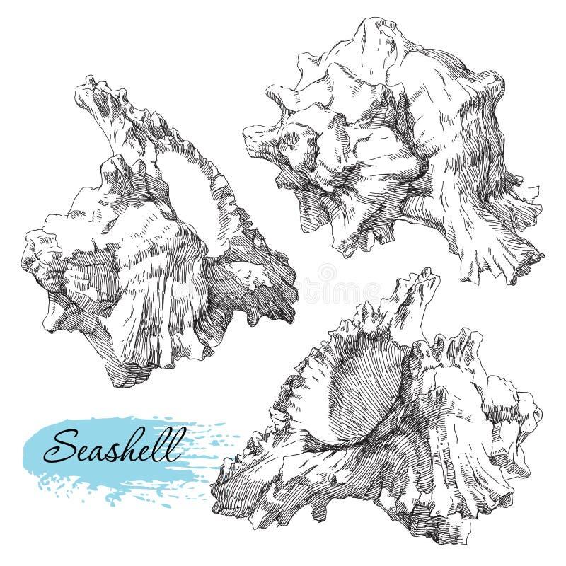 Reeks diverse overzeese shells stock illustratie