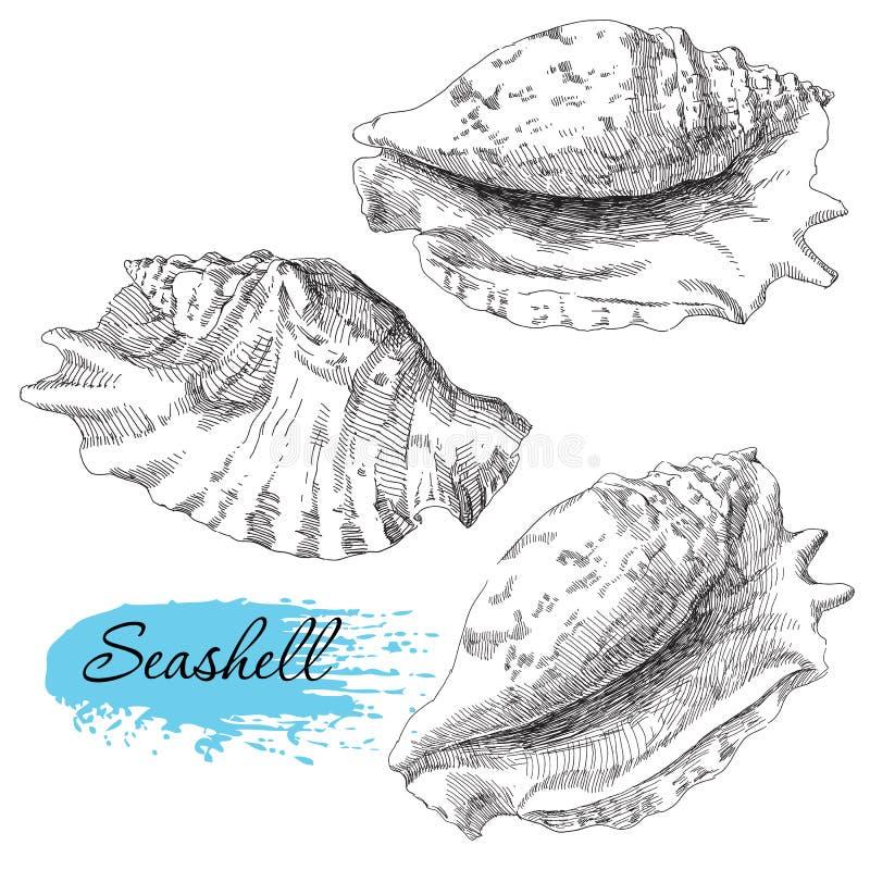 Reeks diverse overzeese shells royalty-vrije illustratie
