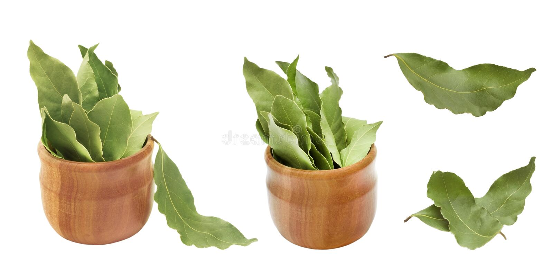 Reeks droge aromatische baaibladeren in een houten die kom op wit wordt geïsoleerd Foto van de oogst van de laurierbaai voor de z stock fotografie
