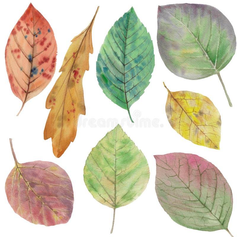 Reeks elegante bladeren voor ontwerp De kleurrijke Bladeren van de Herfst stock illustratie