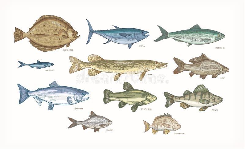Reeks elegante die tekeningen van vissen op witte achtergrond wordt geïsoleerd Bundel van onderwaterdieren of schepselen die in o royalty-vrije illustratie