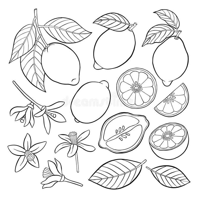 Reeks elementen van een citroen vector illustratie
