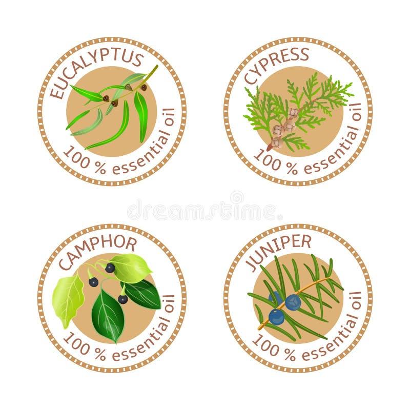 Reeks etherische oliënetiketten Eucalyptus, cipres, kamfer, jeneverbes royalty-vrije illustratie