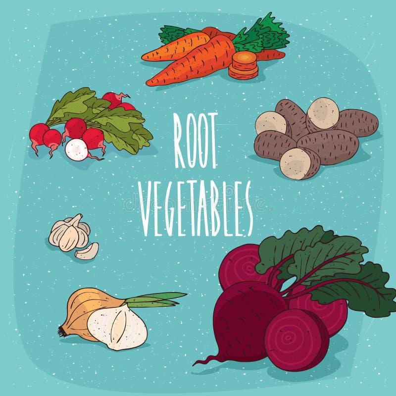 Reeks geïsoleerde clipart eetbare wortelgewassen stock illustratie