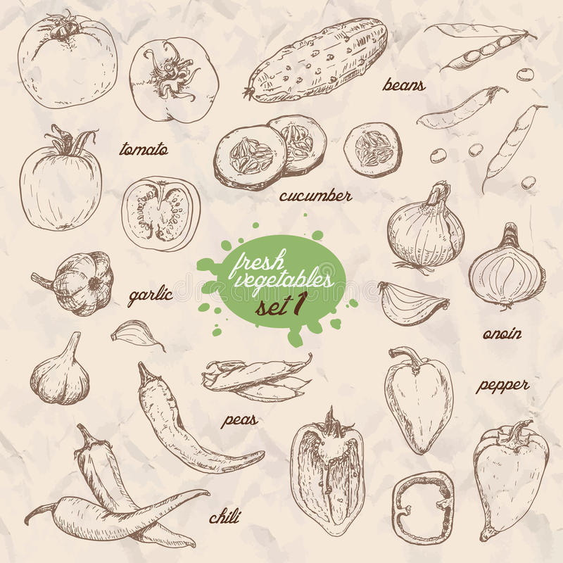 Reeks geïsoleerde groenten in een schetsstijl Peper, tomaat, komkommer, peper, uien, knoflook, erwten en bonen royalty-vrije illustratie