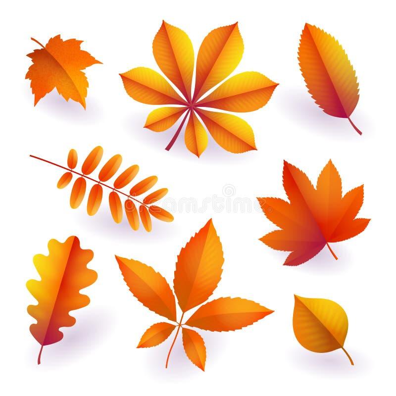 Reeks geïsoleerde heldere oranje de herfst gevallen bladeren Elementen van dalingsgebladerte Vector royalty-vrije illustratie