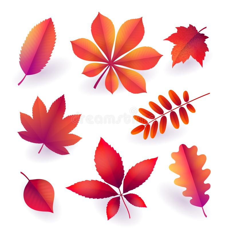 Reeks geïsoleerde heldere rode de herfst gevallen bladeren Elementen van dalingsgebladerte Vector stock illustratie