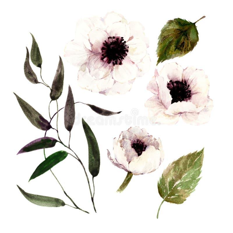 Reeks geïsoleerde waterverf witte papavers, bladeren, tak vector illustratie