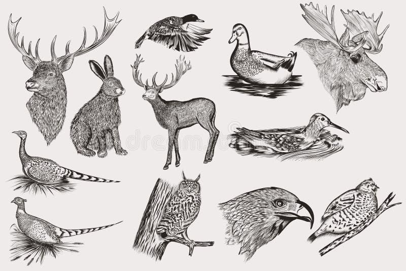 Reeks gedetailleerde hand getrokken dieren stock illustratie