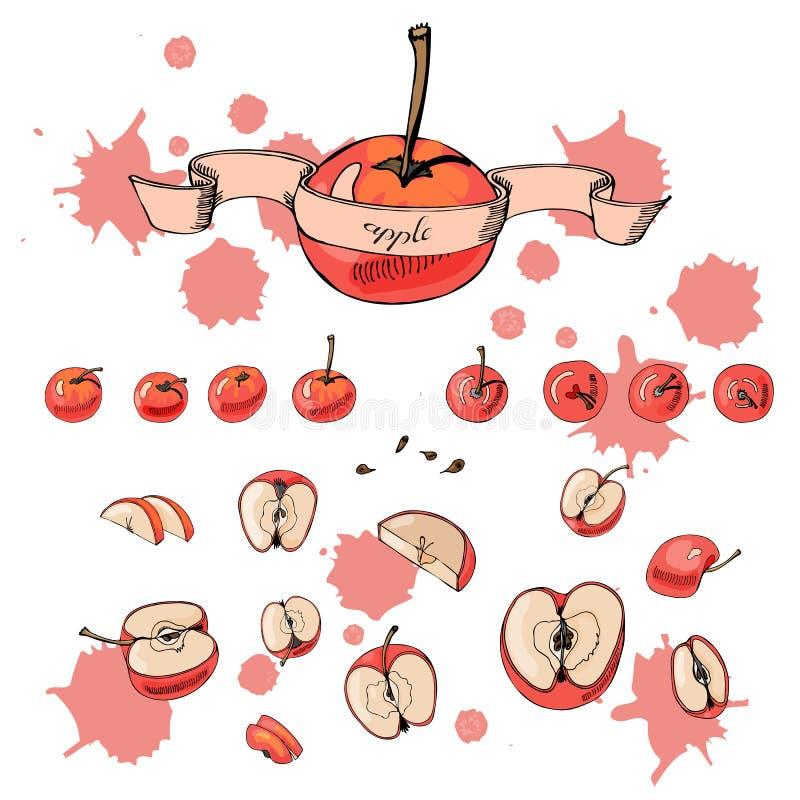 Reeks gehele en gesneden appelen Hand getrokken grafische en gekleurde schets met appelen, band en abstracte vlekken op witte ach stock illustratie