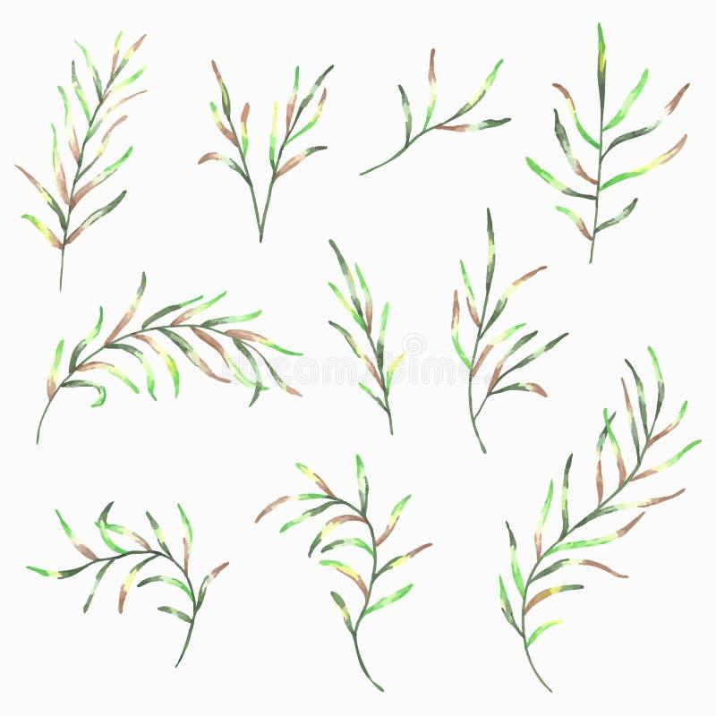 Reeks geschilderde bladeren van de waterverflente op witte achtergrond stock illustratie