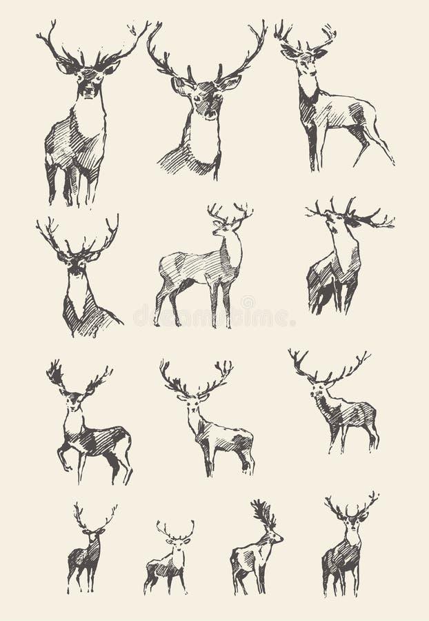 Reeks getrokken edele deers vectorillustratie, schets stock illustratie