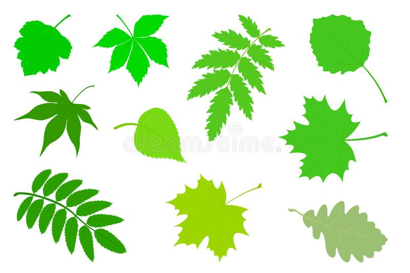 Reeks groene bladeren vector illustratie