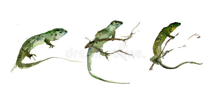 Reeks groene hagedissen op de witte achtergrond Het Schilderen van de waterverf stock illustratie