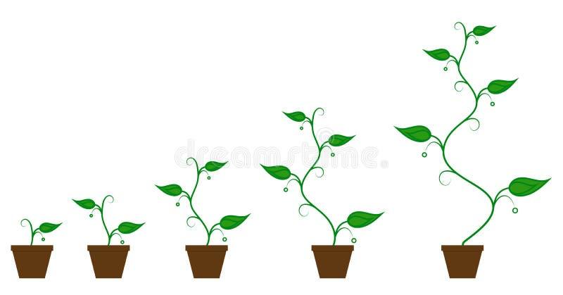 Reeks groene pictogrammen - de fase van de installatiegroei royalty-vrije illustratie