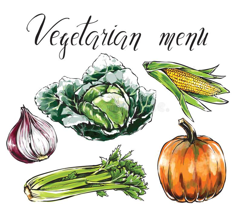 Reeks groenten, gezond voedsel Pompoen, graan, ui, selderie, cabb vector illustratie