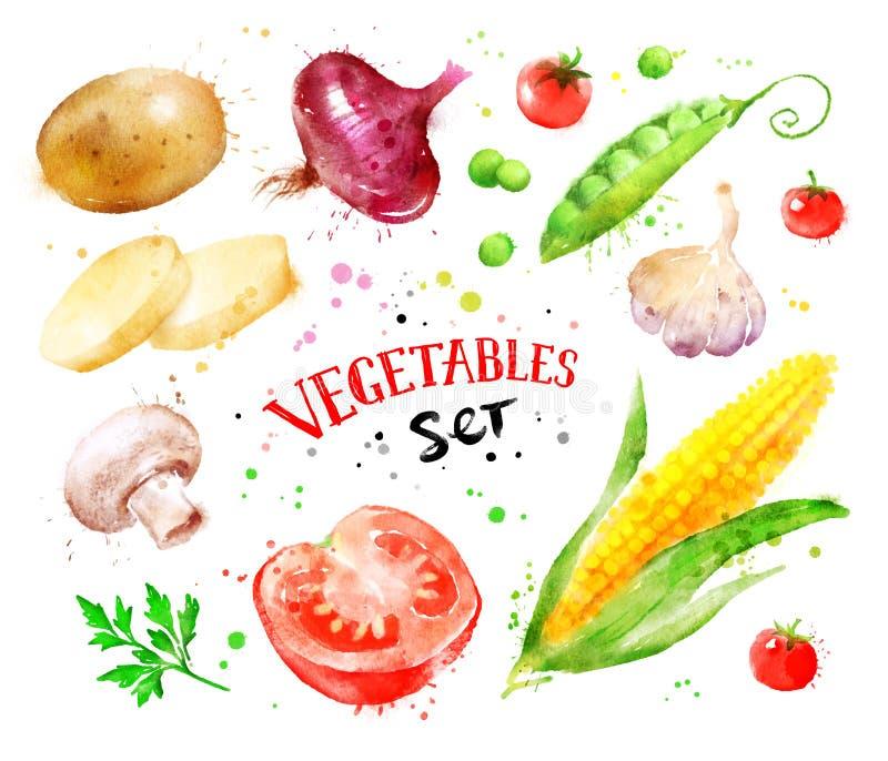 Reeks groenten met verfplonsen royalty-vrije illustratie