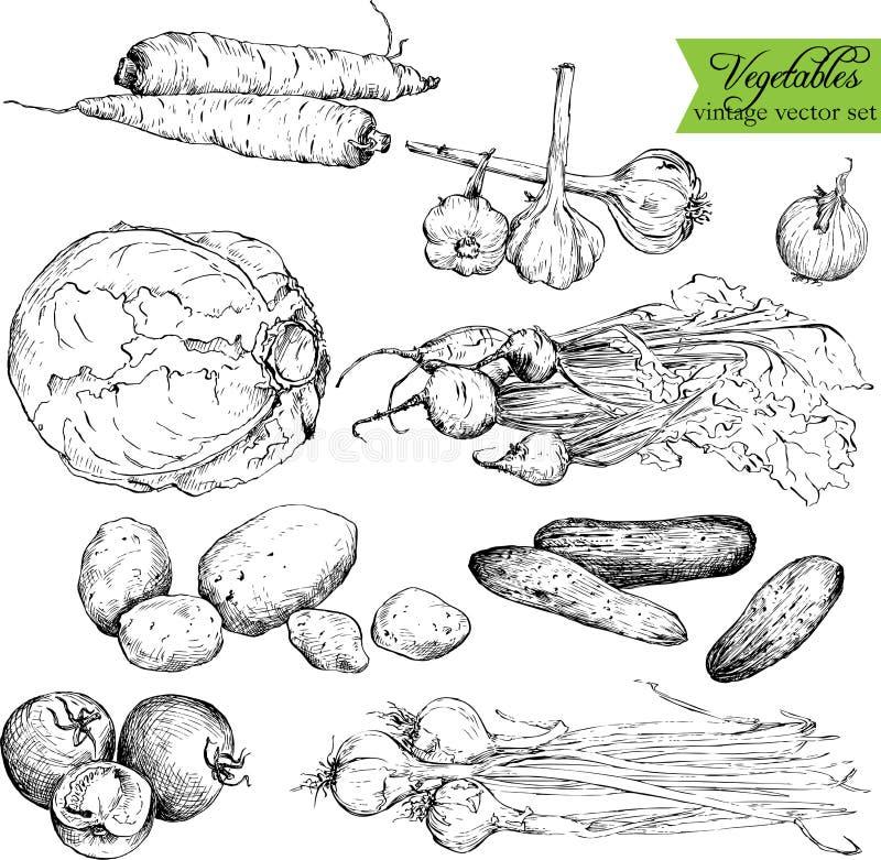 Reeks groenten van de inkttekening vector illustratie