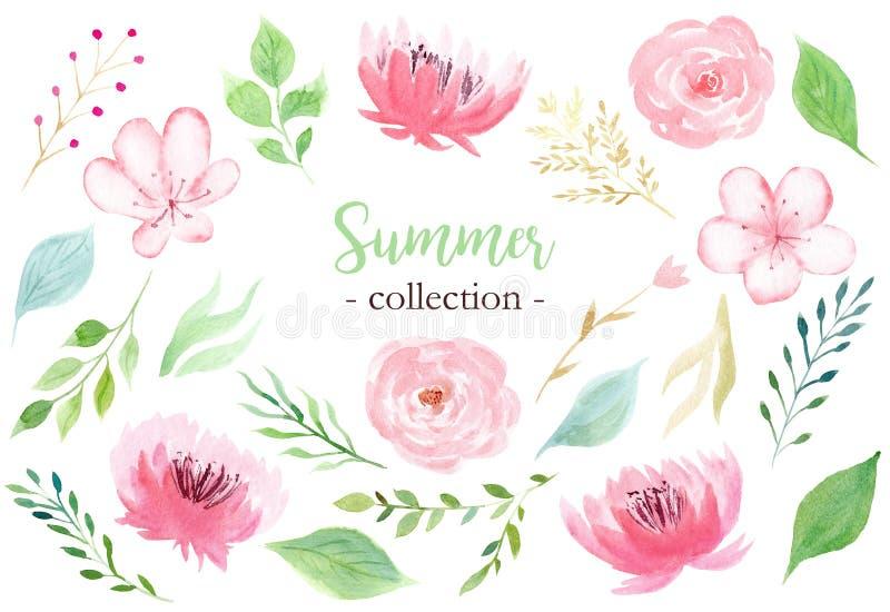 Reeks hand geschilderde waterverfbloemen in pastelkleur roze kleur stock illustratie