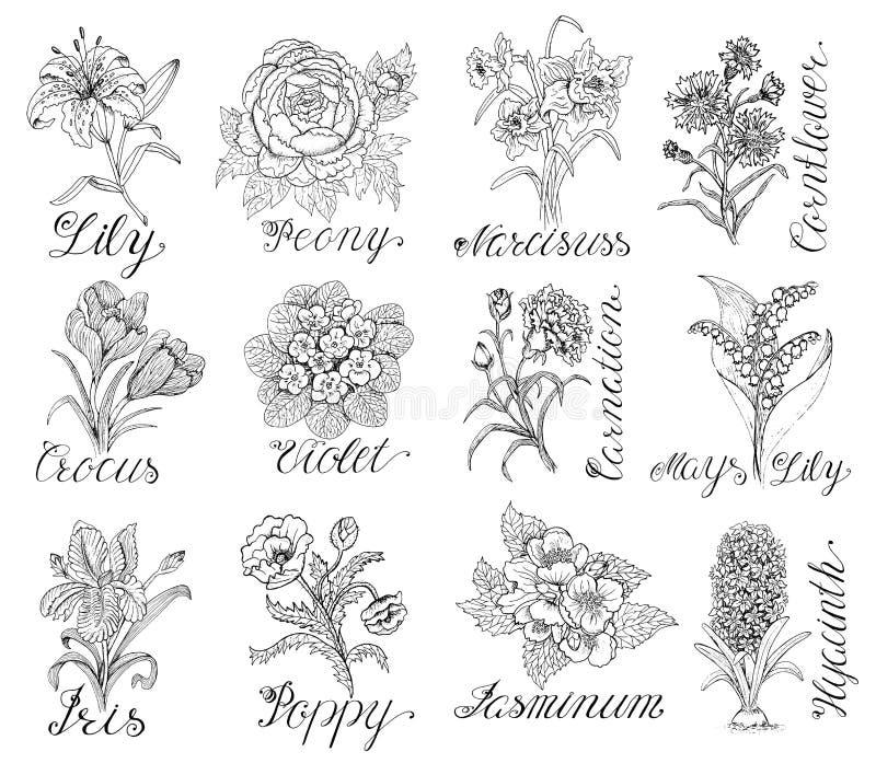 Reeks hand getrokken bloemen met kalligrafie het van letters voorzien stock illustratie