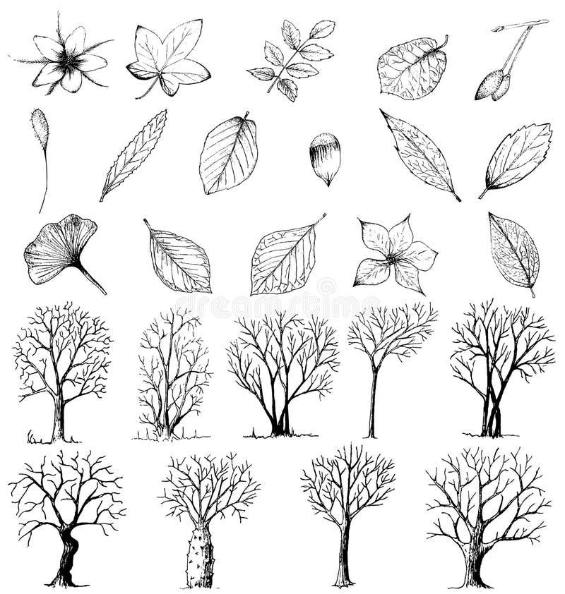 Reeks hand getrokken installaties en bomen stock illustratie