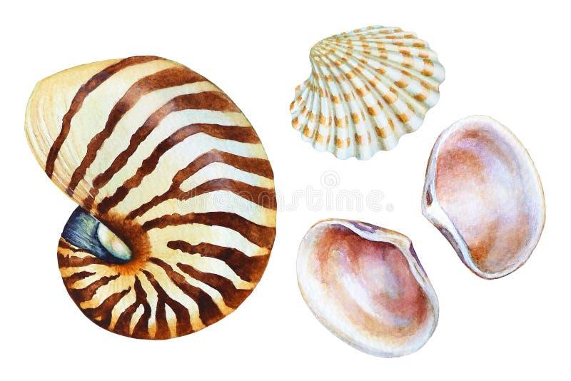 Reeks hand getrokken waterverf overzeese shells vector illustratie