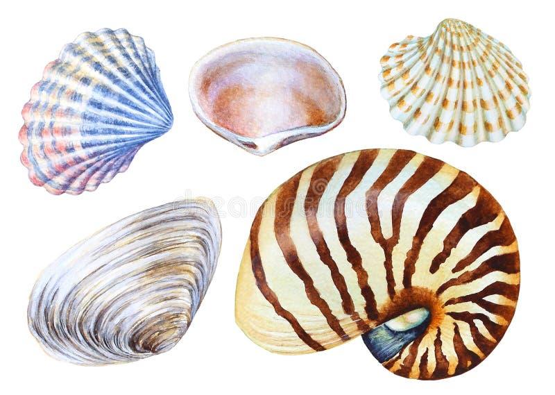 Reeks hand getrokken waterverf overzeese shells stock illustratie