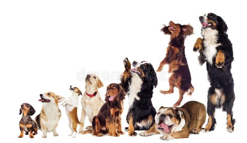Reeks honden die zijdelings en naar omhoog eruit zien stock fotografie