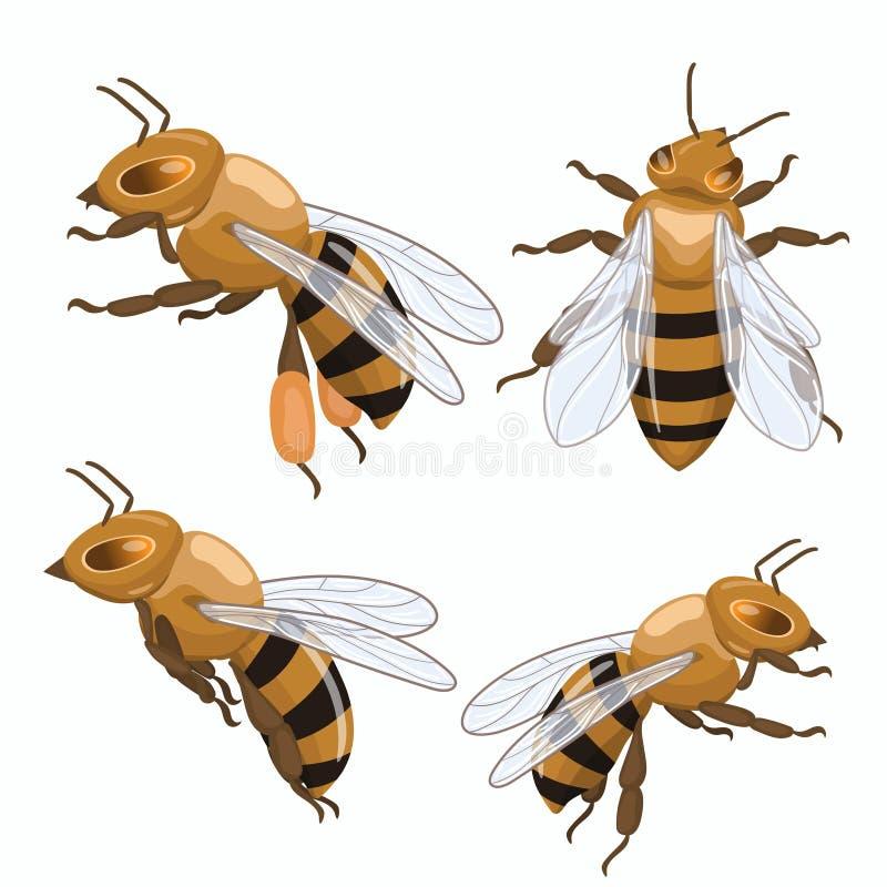Reeks honingbijen die op witte achtergrond wordt geïsoleerd Vector grafiek vector illustratie