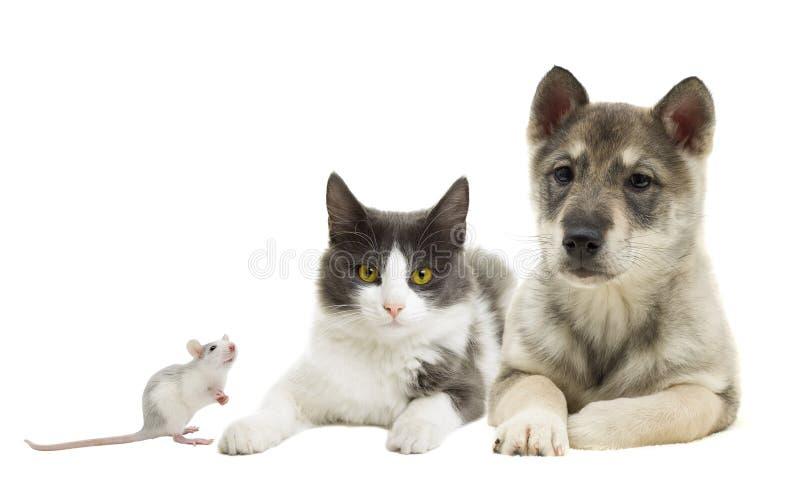 Reeks huisdieren stock afbeeldingen