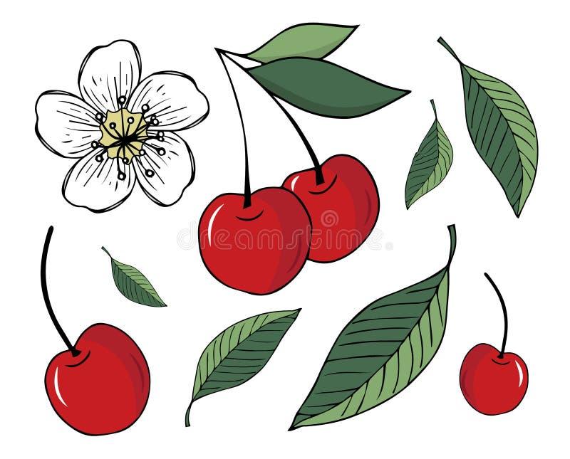 Reeks illustraties van kersen en bladeren, die op witte achtergrond worden geïsoleerd royalty-vrije illustratie