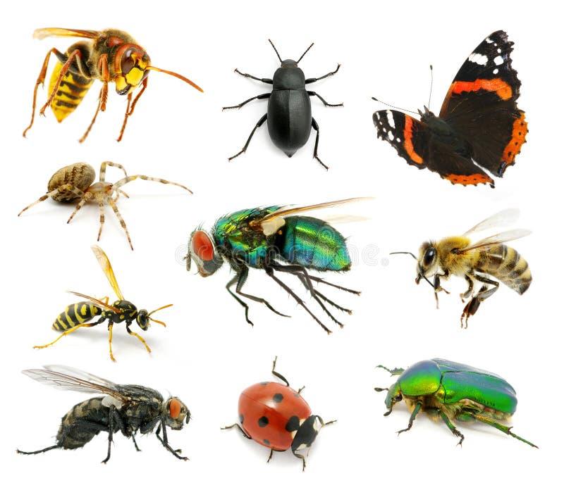 Reeks insecten royalty-vrije stock afbeelding