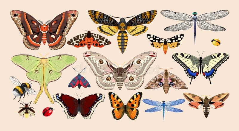 Reeks insecten stock illustratie