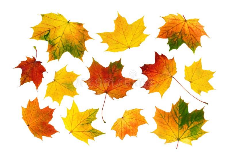 Reeks kleurrijke de herfstbladeren royalty-vrije stock fotografie