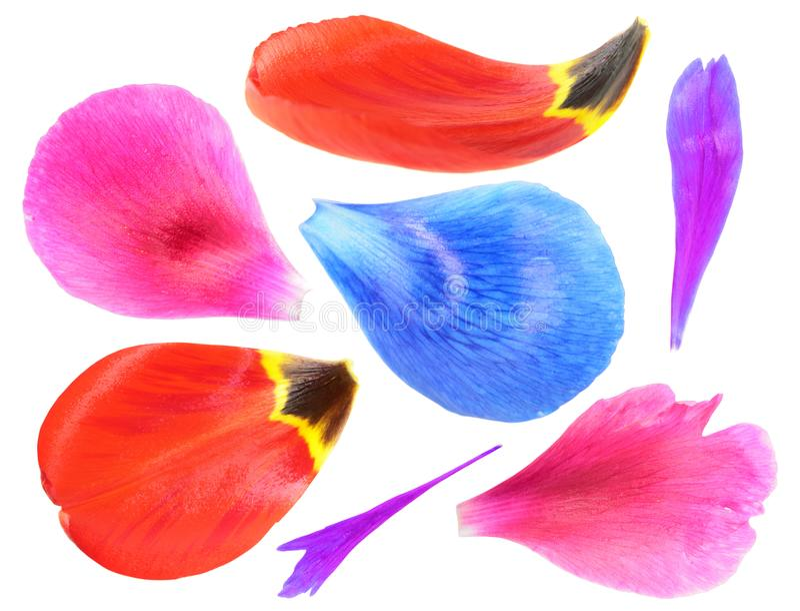 Reeks kleurrijke die bloembloemblaadjes op witte achtergrond wordt geïsoleerd stock foto's