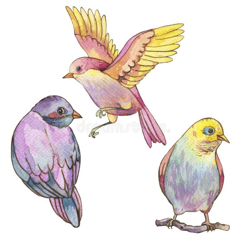 Reeks kleurrijke die waterverfvogels op witte achtergrond wordt geïsoleerd vector illustratie