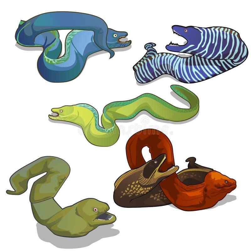 Reeks kleurrijke moray palingen die op witte achtergrond wordt geïsoleerd De vectorillustratie van het beeldverhaalclose-up stock illustratie