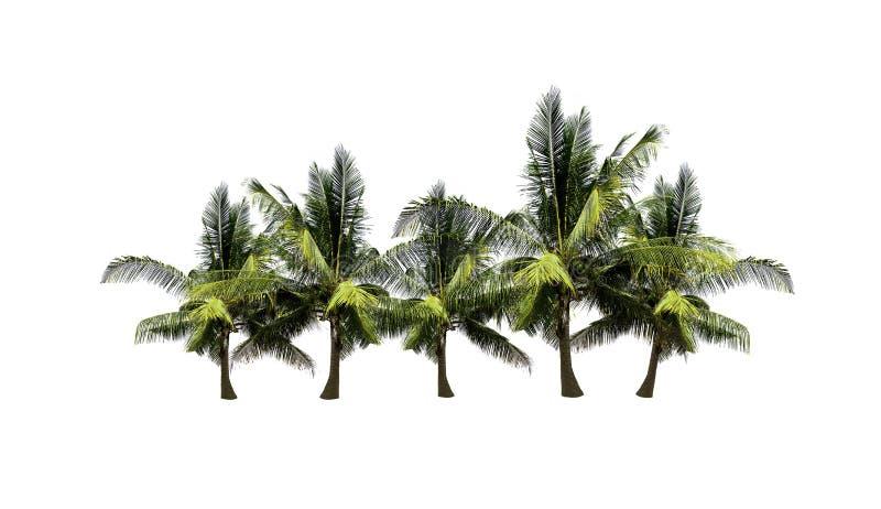 Reeks kokospalmen op witte achtergrond wordt geïsoleerd die royalty-vrije stock foto's