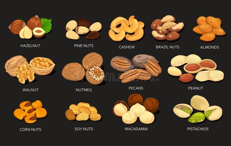 Reeks korrels en bonen van voedselnoten royalty-vrije illustratie