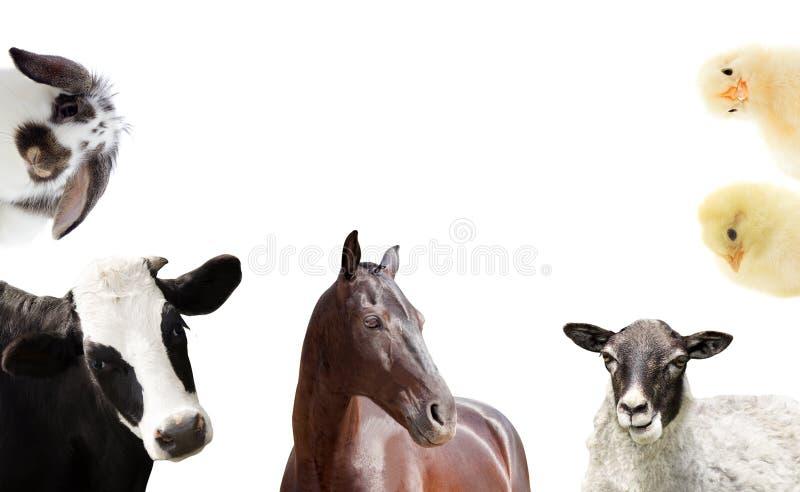 Reeks landbouwbedrijfdieren stock afbeeldingen