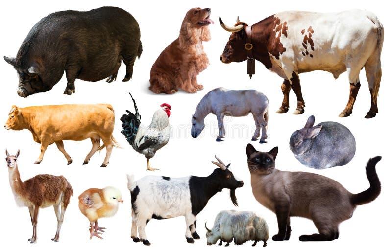 Reeks landbouwbedrijfdieren royalty-vrije stock afbeelding