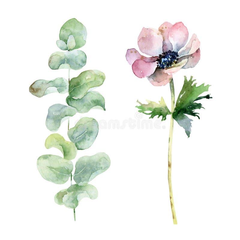 Reeks met anemoon en eucalyptus royalty-vrije illustratie