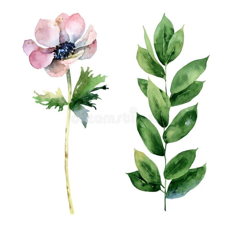 Reeks met anemoonbloem en groene tak stock illustratie