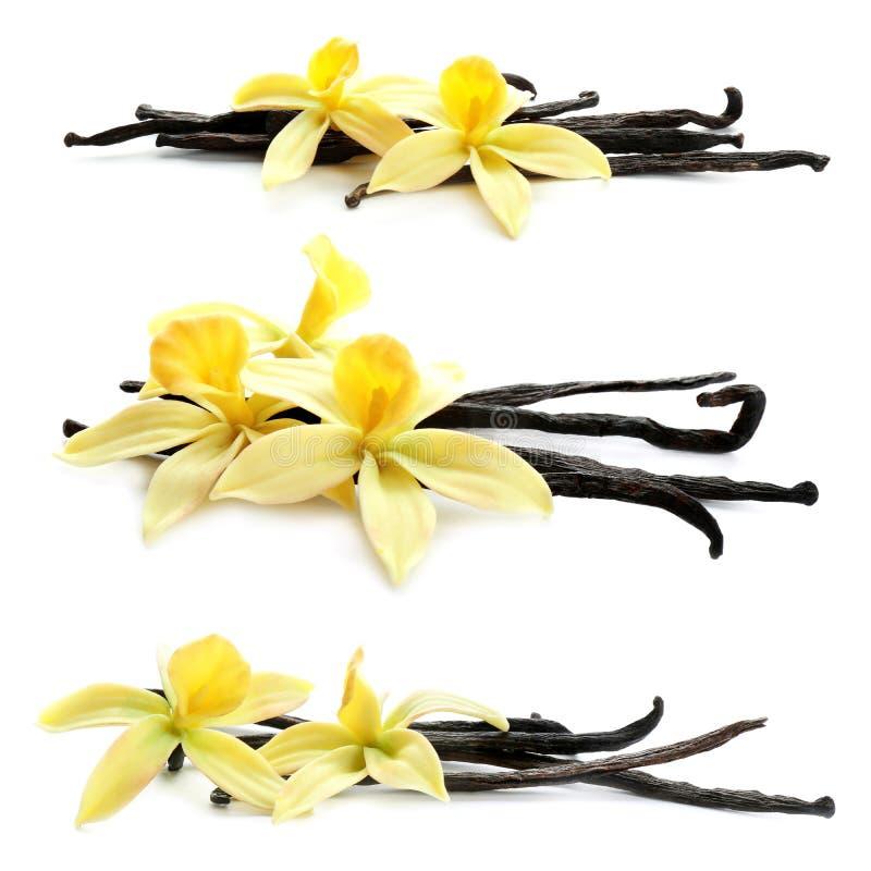 Reeks met aromatische vanille-peul en bloemen op de achtergrond stock foto's